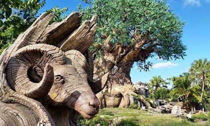 Animal Kingdom - private Disney VIP tours